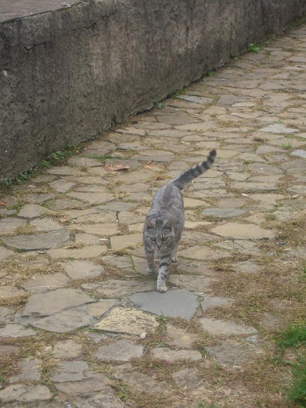 Бергамаский кот
