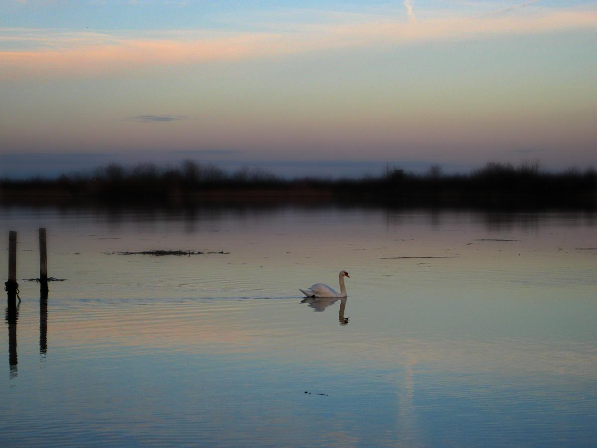 Белеет лебедь на закате :)