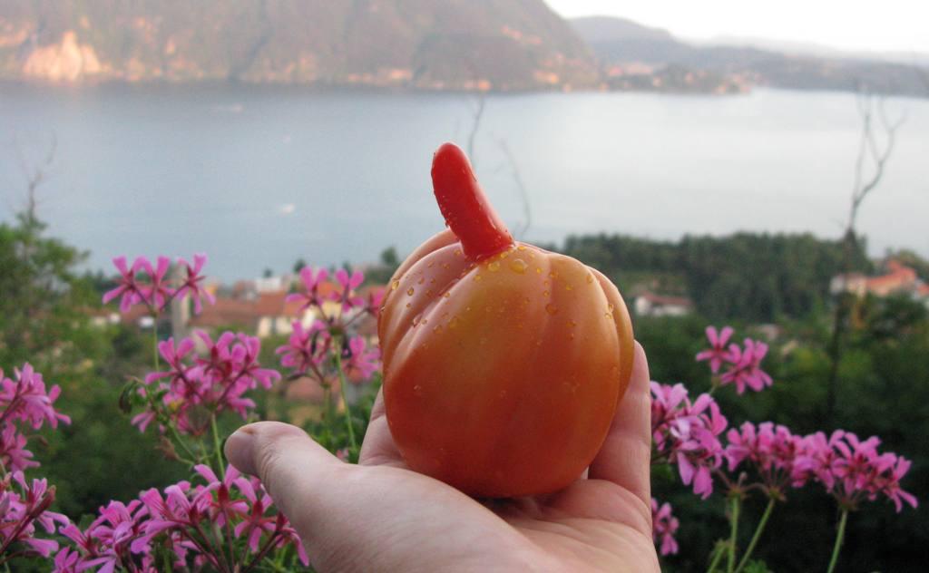 Сексуальный ... помидор!