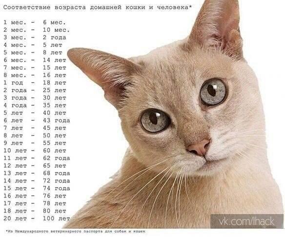 Соответствие возраста домашней кошки и человека.